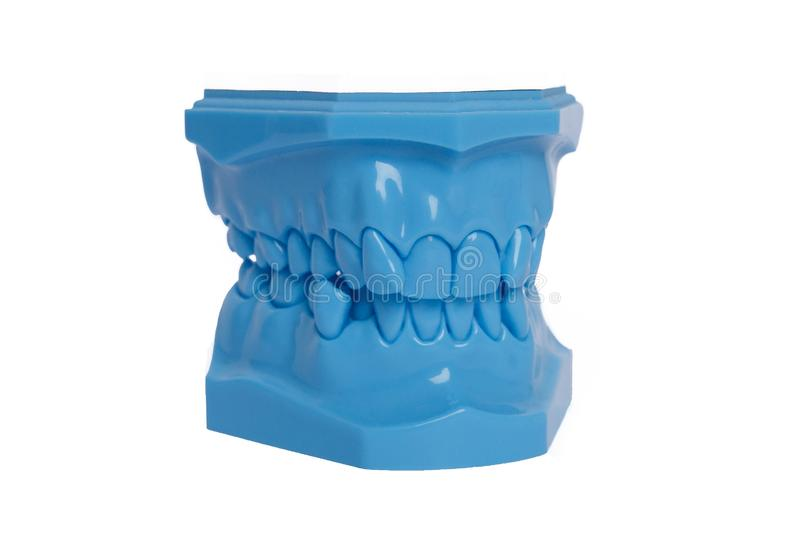 Orthodontic Blue Model used in dentistry for demonstration and educational purposes. Frontal view of blue orthodontic model used in dentistry for demonstration royalty free stock photography