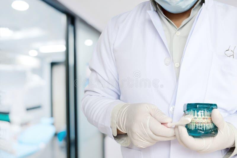 Orthodontisches Modell der Zahnarztshow in seiner Hand lizenzfreie stockfotos