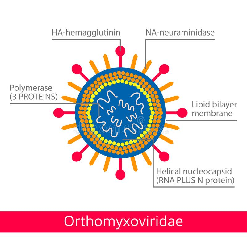 Orthomyxoviridae Ταξινόμηση των ιών απεικόνιση αποθεμάτων