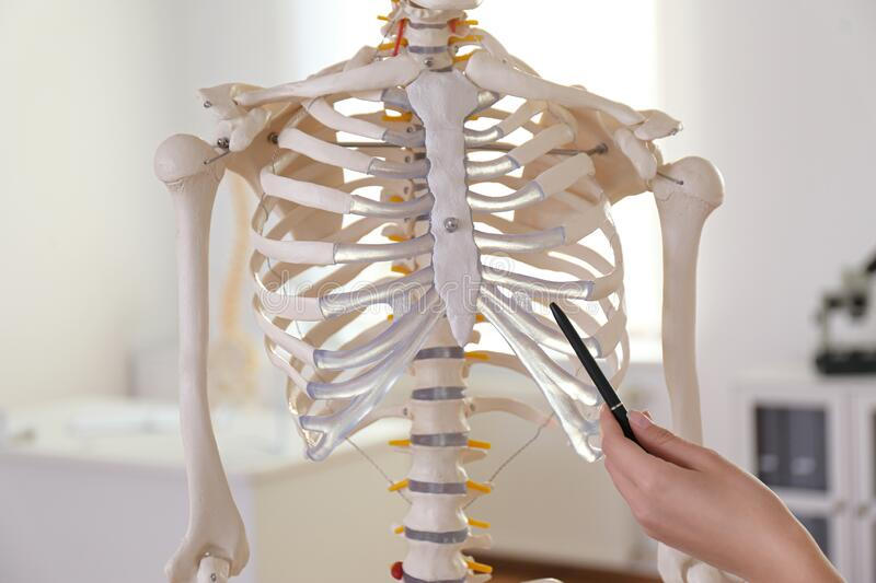 Orthopedist pointing on human skeleton model in clinic. Closeup stock photos