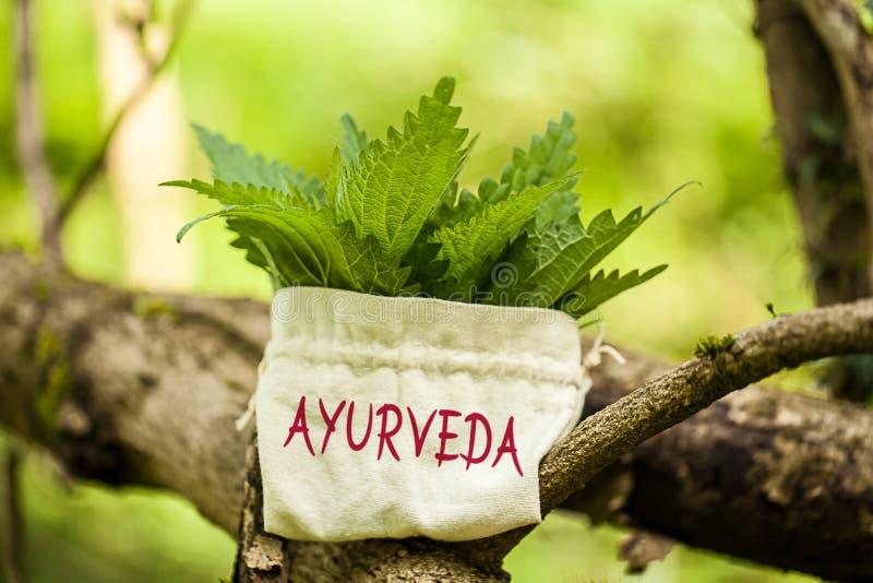 Ortie cuisante avec le mot Ayurveda images libres de droits