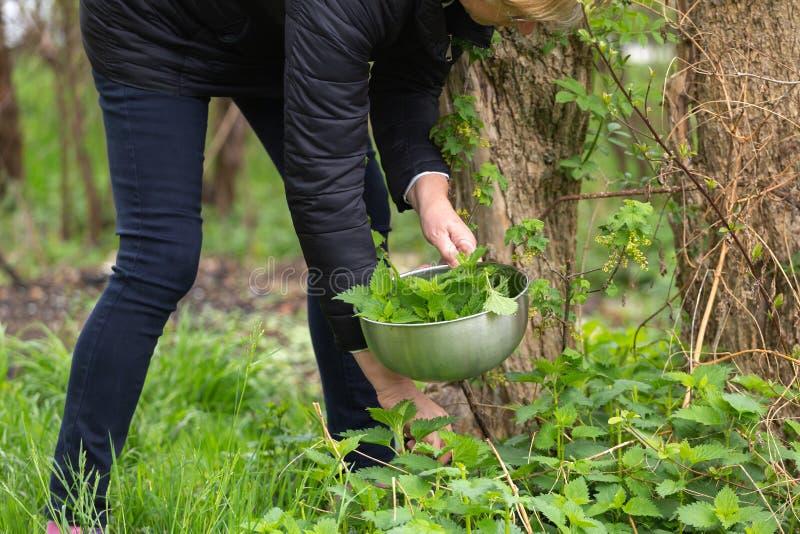 Ortiga de la cosecha de la mujer en el jard?n imagenes de archivo