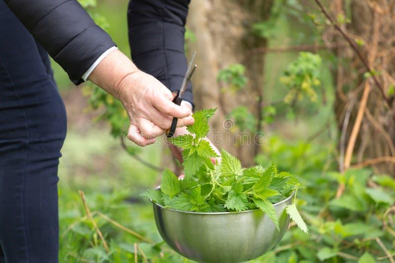 Ortiga de la cosecha de la mujer en el jard?n fotos de archivo