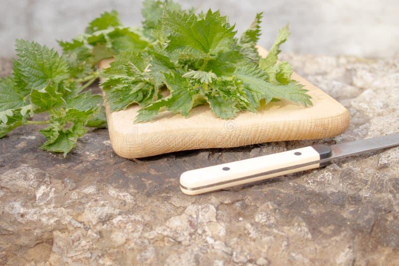Ortiga de la planta medicinal fresca en una tabla de cortar imagenes de archivo