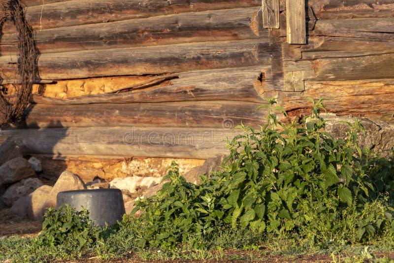 Ortiga de picadura con las hojas verdes en fondo de madera marrón de la pared del registro con efecto del bokeh en la salida del  fotos de archivo libres de regalías