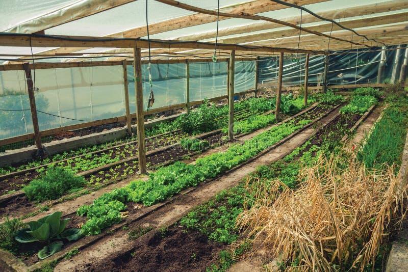 Orto vegetale all'interno di una serra fotografia stock libera da diritti