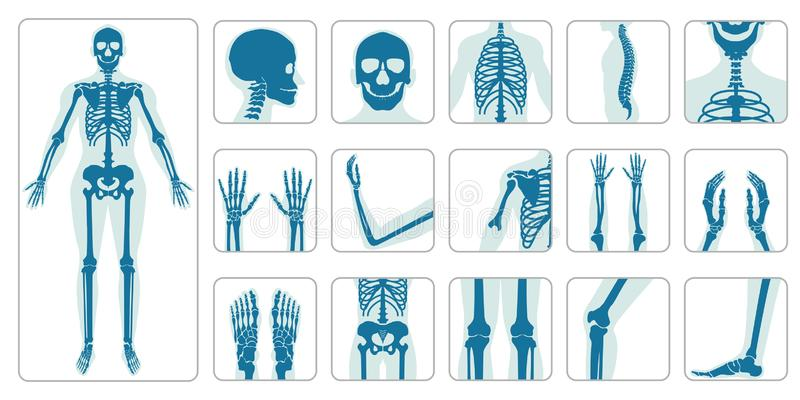 Ortopediska människaben och skelett- symbolsuppsättning royaltyfri illustrationer
