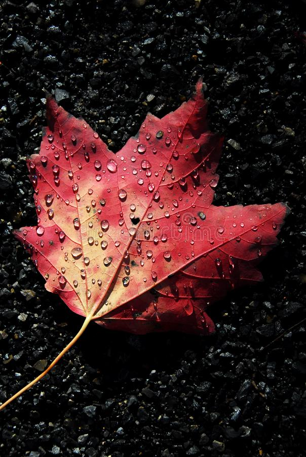 Autumn Dew foto de stock