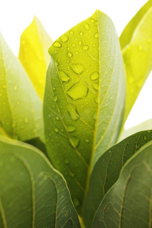 Orvalho e textura natural fotografia de stock