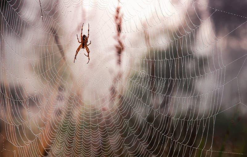 Orvalho em uma Web de aranha imagem de stock
