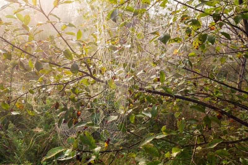 Orvalho enevoado da manhã no prado da floresta da montanha foto de stock royalty free