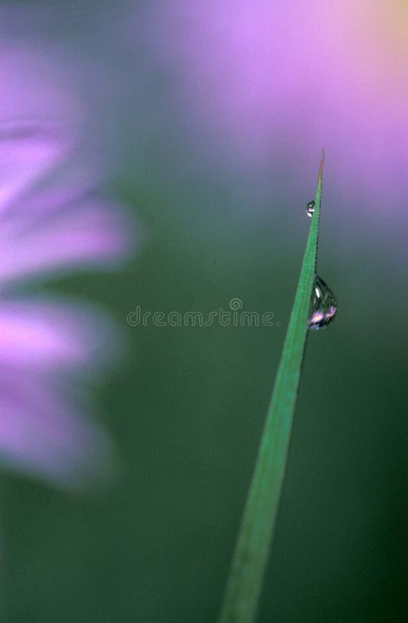 Orvalho na grama