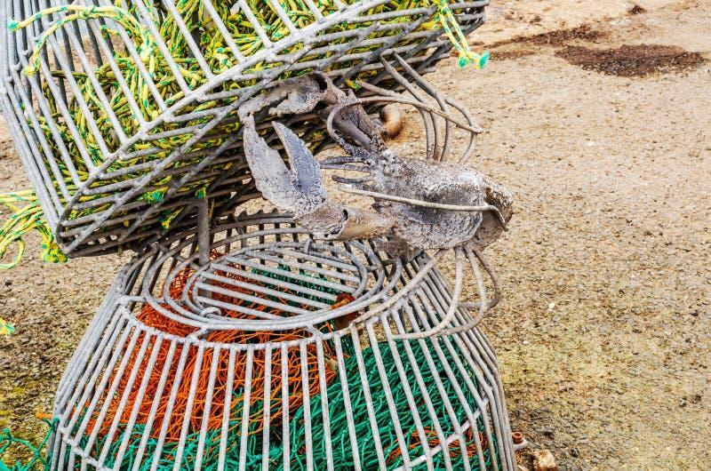 Oryginalny ornament w połowu porcie, żelazny homar w homarze fotografia royalty free