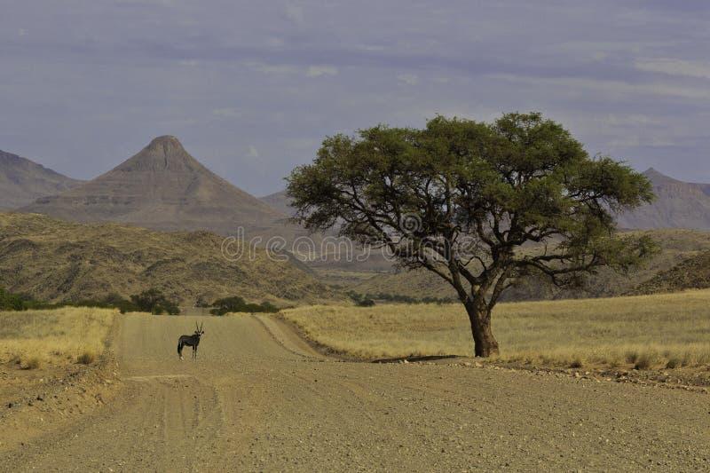 Oryx onder een boom stock fotografie