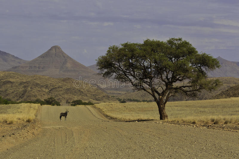 Oryx sotto un albero fotografia stock