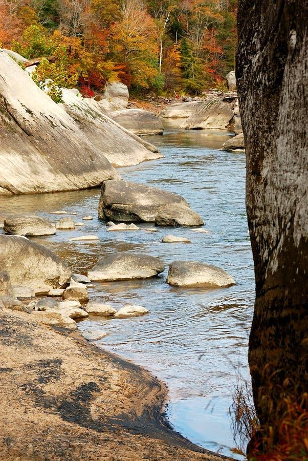 orzeł rzeki obrazy royalty free