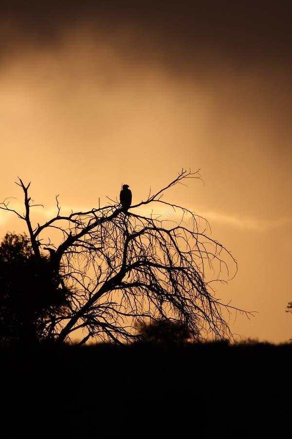 orzeł słońca zdjęcie stock