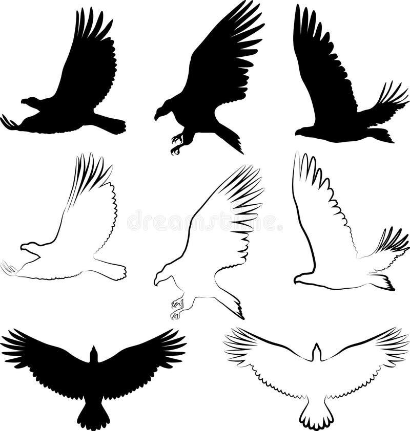 Download Orzeł ilustracja wektor. Obraz złożonej z belfer, sylwetka - 26255666
