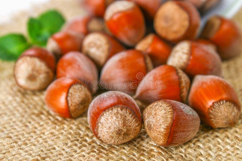 Orzechów włoskich hazelnuts rozpraszali na parciaku na białym drewnianym stole zdjęcie stock