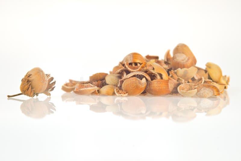 Orzechowa orzech włoski skorupa zdjęcie royalty free
