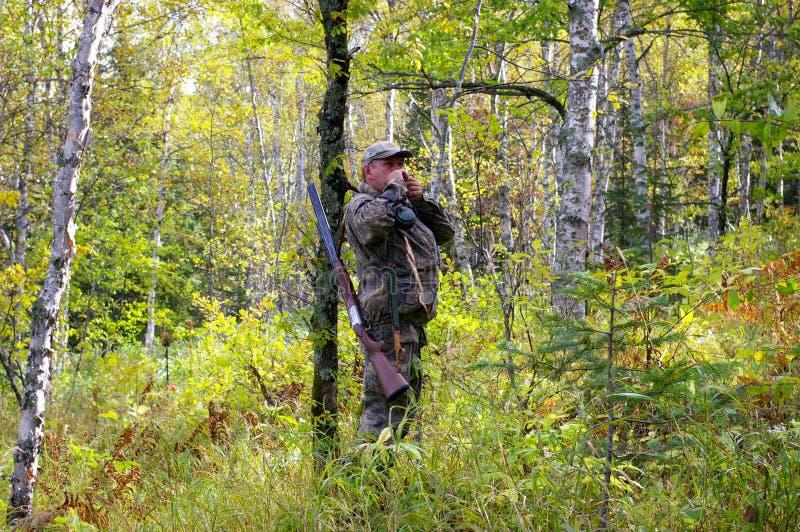 orzechowy kurny polowanie zdjęcie royalty free