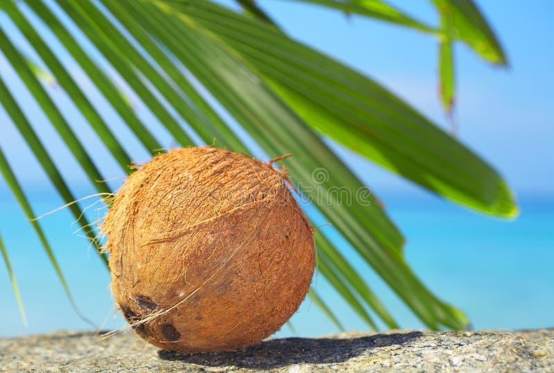 orzechy kokosowe fotografia royalty free