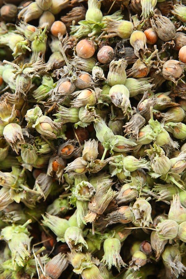 Orzechy leszczyny zielony orzech laskowy Organiczne i świeże orzechy laskowe na tle fotografia stock