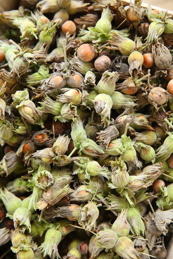 Orzechy leszczyny zielony orzech laskowy Organiczne i świeże orzechy laskowe na tle fotografia royalty free