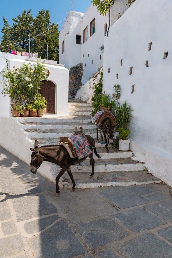 Osła taxi †'osły używać nieść turystów akropol L zdjęcia stock