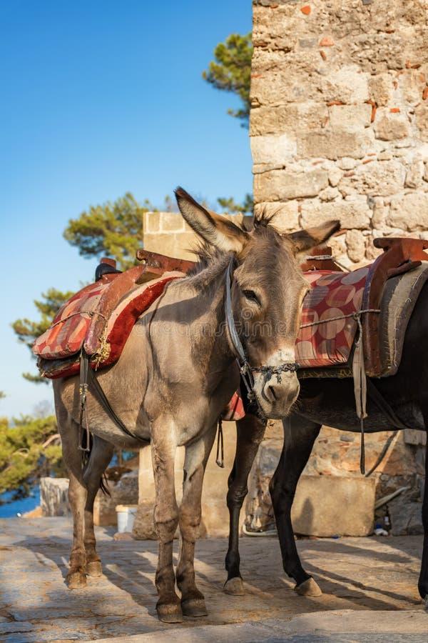 Osła taxi †'osły używać nieść turystów akropol L obrazy royalty free