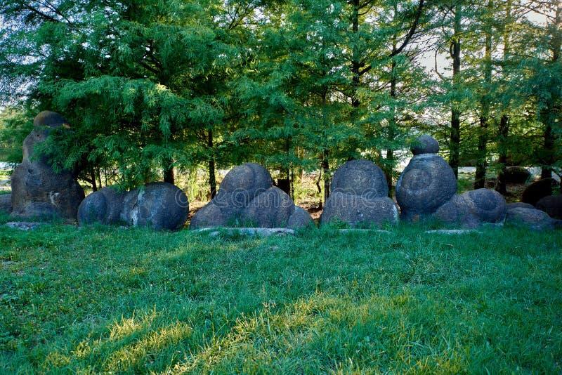Osłupiały amonit jest grupą jak kamienie Amonit obrazy stock