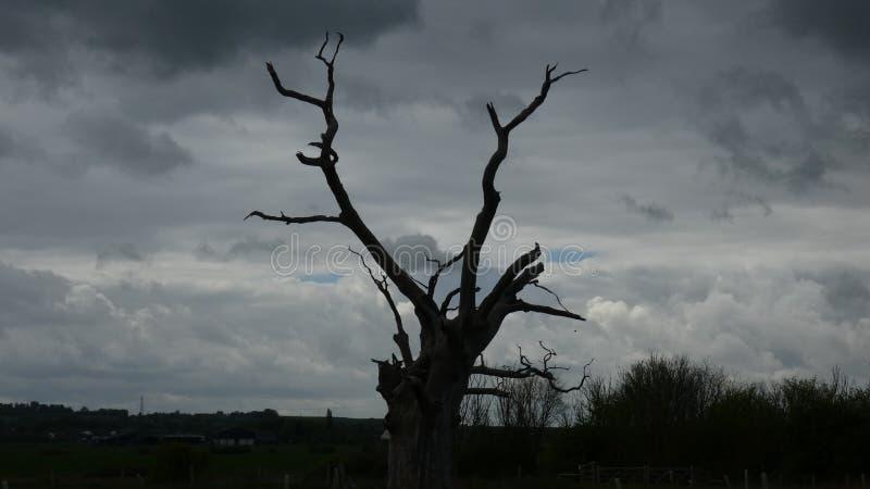 Osłupiały Dębowy drzewo Dosięga niebo obraz royalty free