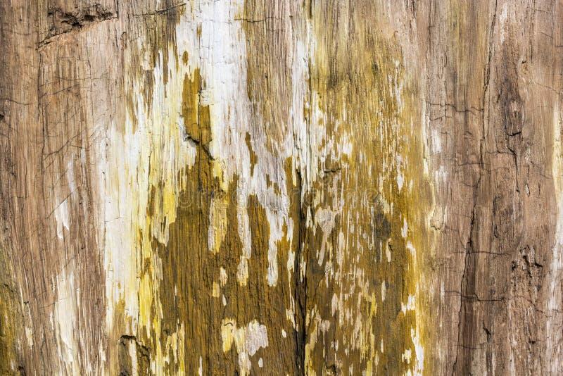 Osłupiały Drewniany tekstury tło zdjęcia royalty free