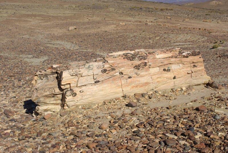 Osłupiały drewno w Patagonia zdjęcia stock