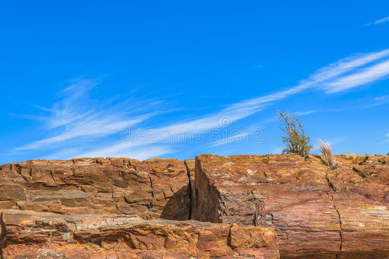 Osłupiały Lasowy park narodowy, Santa Cruz, Argentyna fotografia stock