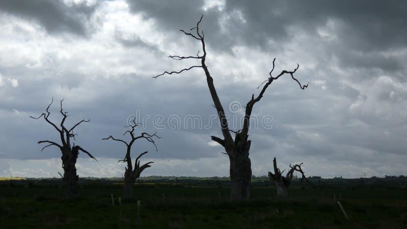 Osłupiali Dębowi drzewa na Chmurnym dniu zdjęcia royalty free