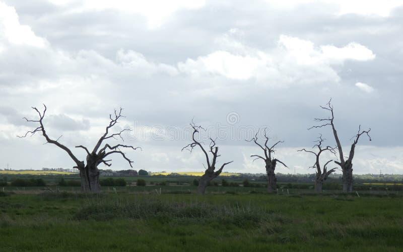 Osłupiali Dębowi drzewa na horyzoncie zdjęcie royalty free