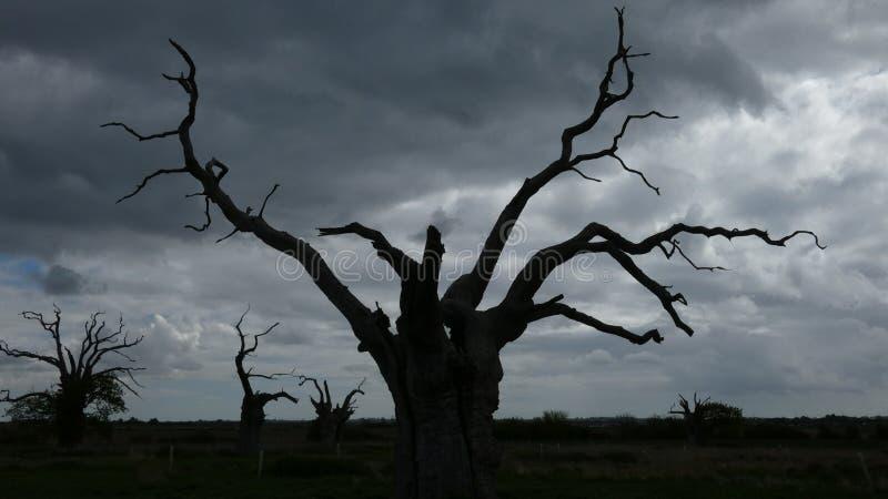 Osłupiali Dębowi drzewa w Ciemnym Chmurnym niebie zdjęcia royalty free
