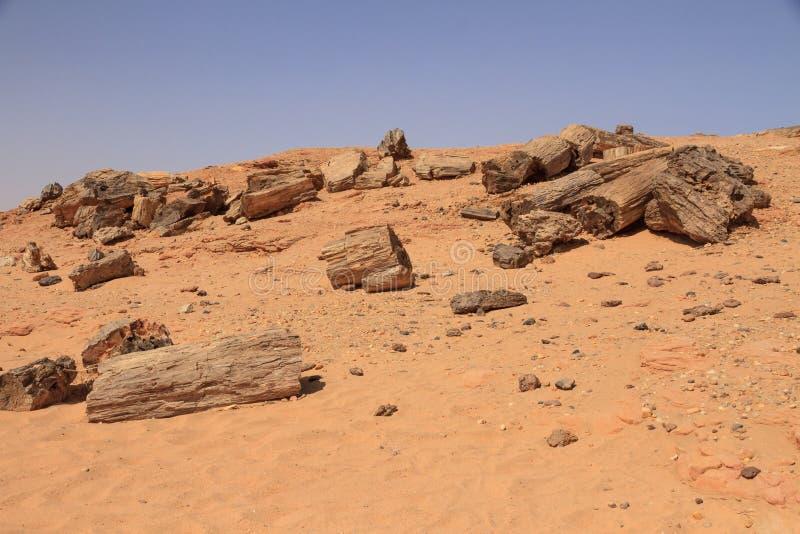 Osłupiali drzewa w Sudan fotografia royalty free