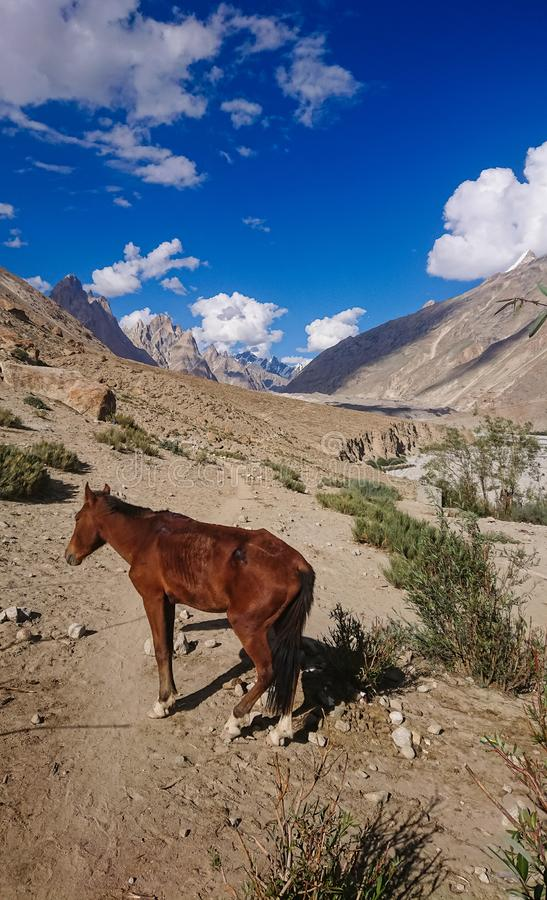 Osły chodzą przepustkę w Karakorum górach w Północnym Pakistan, krajobraz K2 trekking ślad w Karakoram pasmie zdjęcie stock