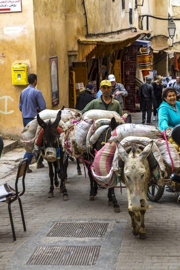 Osły w Medina obrazy royalty free