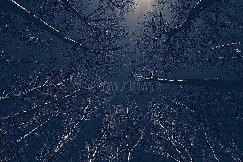 Os álamos canadenses esticam para o céu em Hecla fotografia de stock royalty free