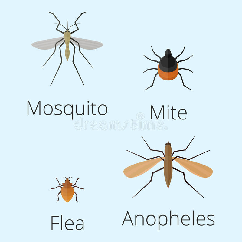 Os ícones coloridos dos insetos isolaram a ilustração selvagem do vetor dos erros da lagarta do sem-fim do verão do detalhe da as ilustração royalty free