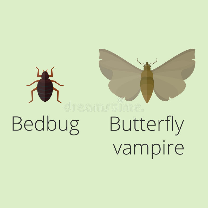 Os ícones coloridos dos insetos isolaram a ilustração selvagem do vetor dos erros da lagarta do sem-fim do verão do detalhe da as ilustração do vetor