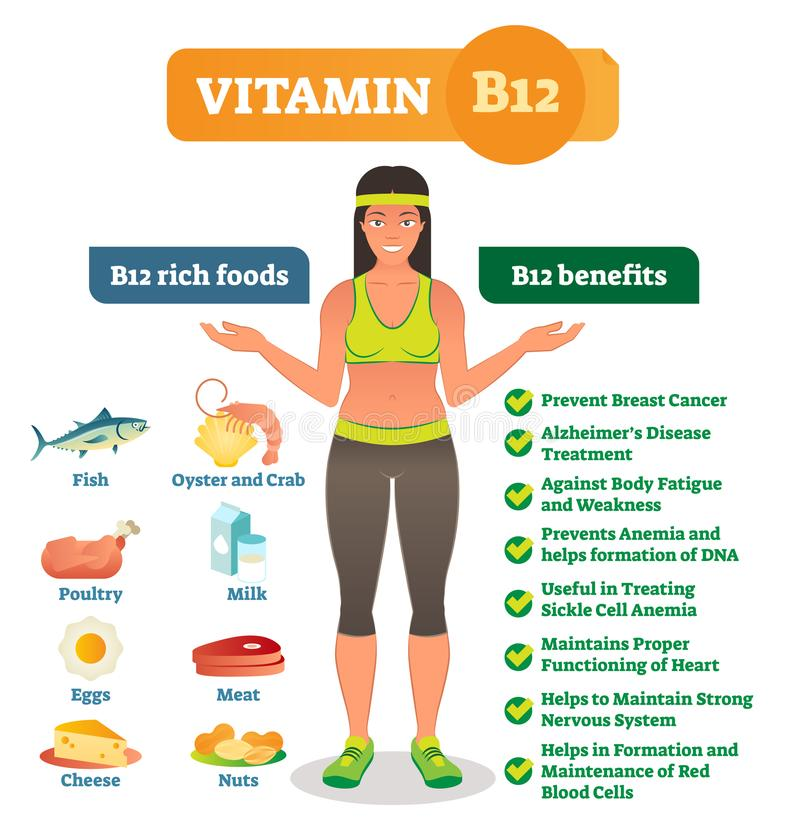 Os ícones do alimento da vitamina B12 e os benefícios de saúde ricos alistam, cartaz informativo do estilo de vida saudável Ilust ilustração royalty free