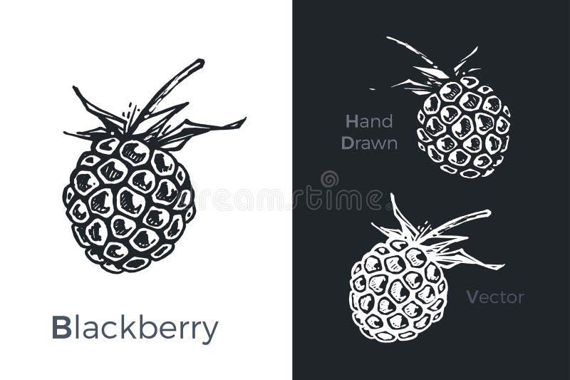 Os ícones tirados mão da amora-preta ajustaram-se isolado no fundo branco e preto do giz Esboço dos frutos para o projeto do empa ilustração stock