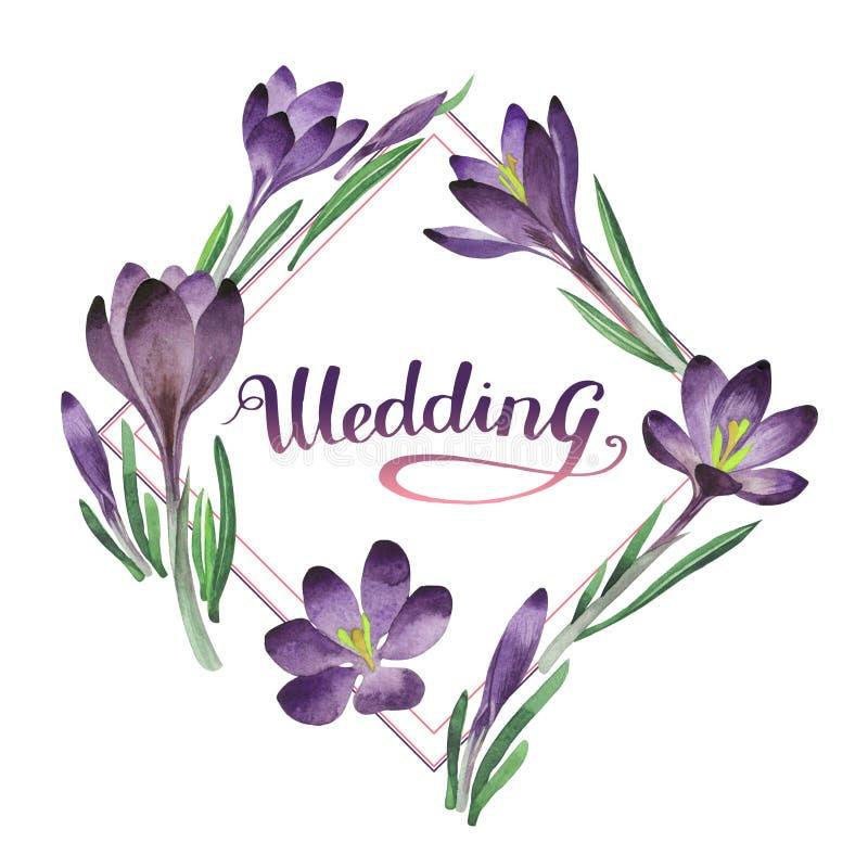 Os açafrões do Wildflower florescem o quadro em um estilo da aquarela isolado ilustração stock