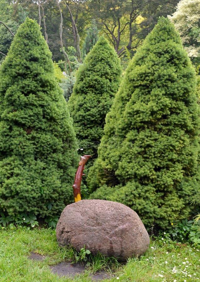 Os abeto cônicos crescem em um jardim fotos de stock royalty free