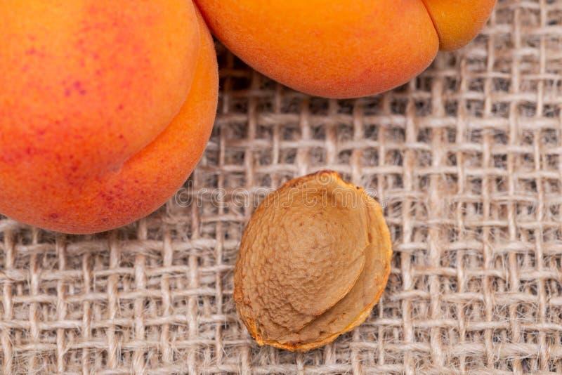 Os abricós e os núcleos de abricó orgânicos frescos a semente de um abricó, chamaram frequentemente 'uma pedra 'no fundo natural  foto de stock royalty free