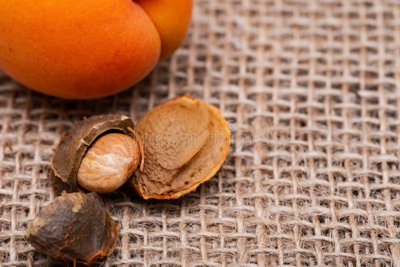 Os abricós e os núcleos de abricó orgânicos frescos a semente de um abricó, chamaram frequentemente 'uma pedra 'no fundo natural  fotografia de stock